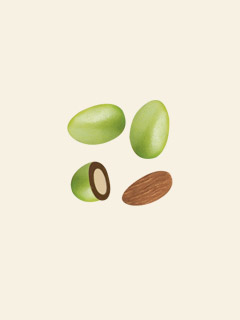 Sugar Coated Chocolate Almonds - Green 3kg