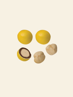 Sugar Coated Chocolate Hazelnuts - Yellow 3kg